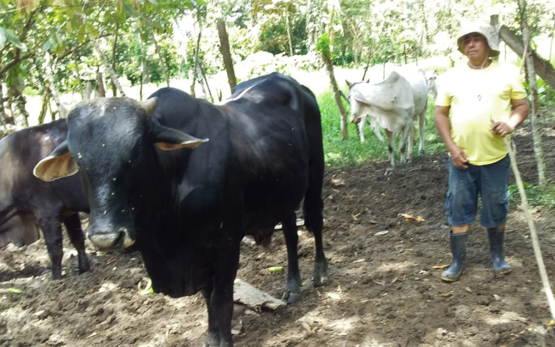Cattle Breeding Project in Costa Rica